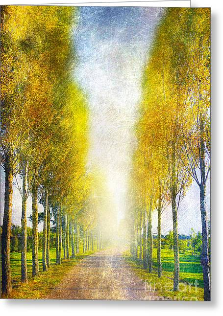 Autumn Trees Greeting Card by Svetlana Sewell