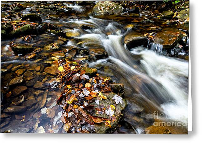 Autumn Upper Shavers Fork Preserve Greeting Card