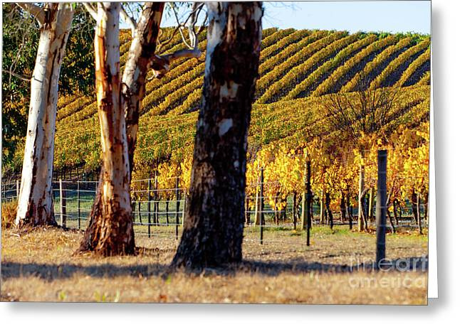 Greeting Card featuring the photograph Autumn Vines by Bill Robinson