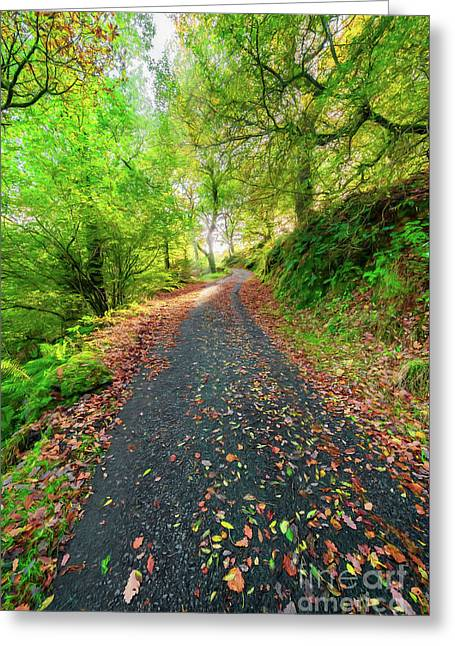 Autumn Way Greeting Card by Adrian Evans