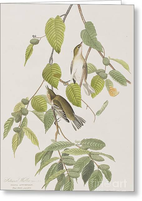 Autumnal Warbler Greeting Card by John James Audubon