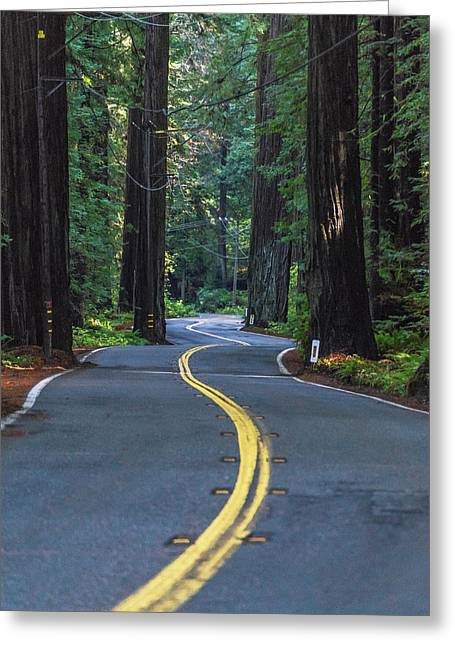 Avenue Of The Giants Greeting Card