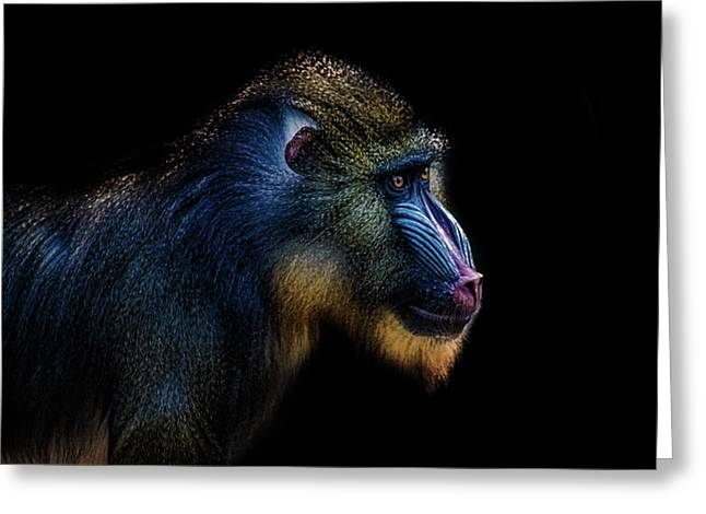 Baboon Greeting Card by Martin Newman