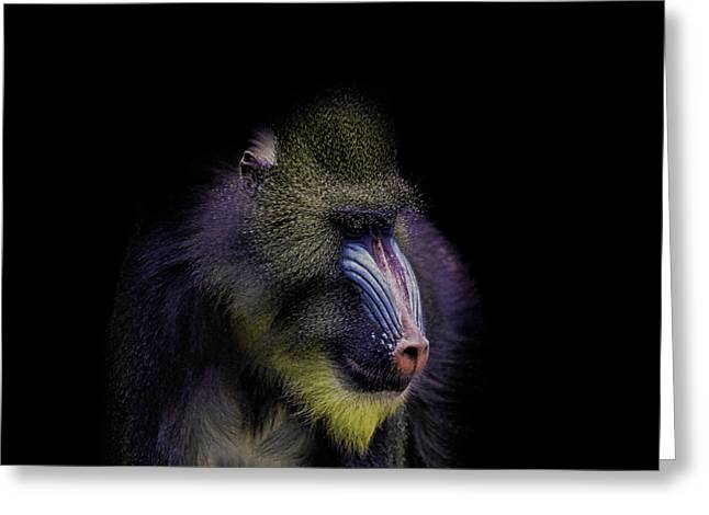Baboon Portrait Greeting Card by Martin Newman