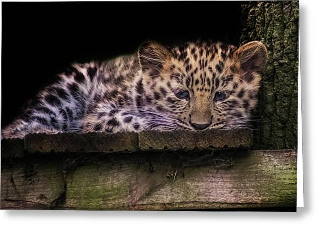 Baby Amur Leopard Greeting Card