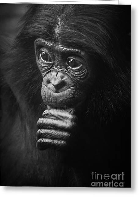 Baby Bonobo Portrait Greeting Card by Helga Koehrer-Wagner