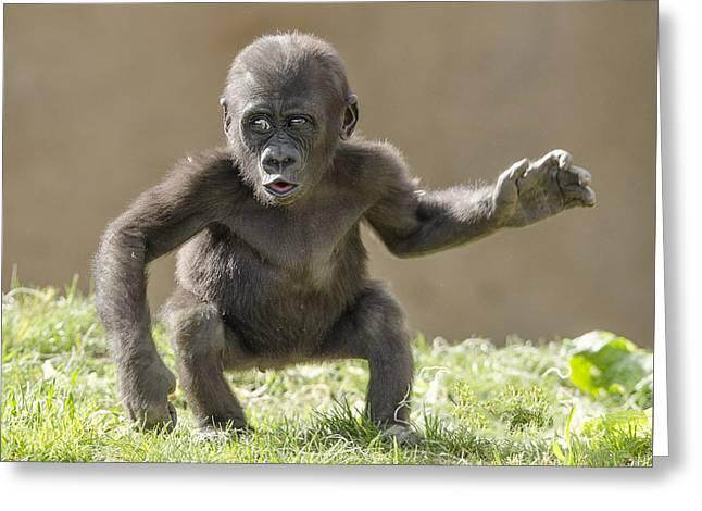 Baby Gorilla Greeting Card