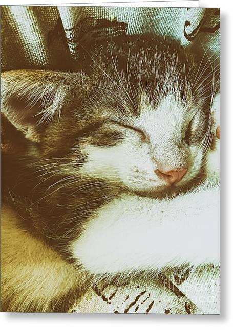 Baby Tabby Cat Sleeping In Kitty Basket Greeting Card