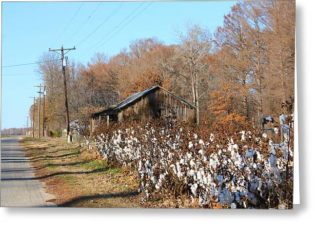 Back Roads Of Ms Greeting Card
