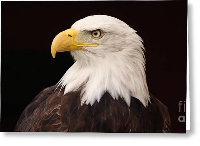 Bald Eagle Greeting Card by David Warrington