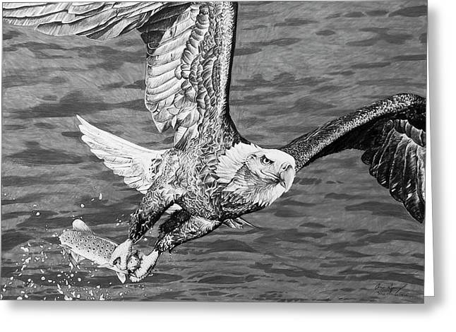 Bald Eagle Fishing Greeting Card