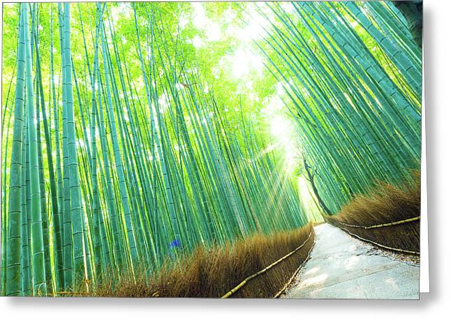 Bamboo Grove Forest Light Rays Trees Tilted Greeting Card