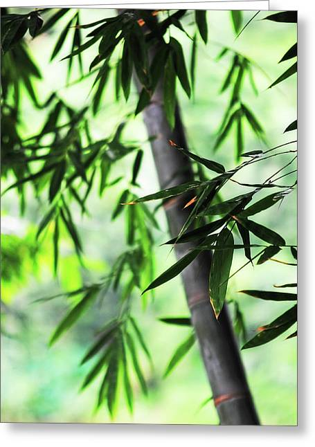 Bamboo Leaves Greeting Card