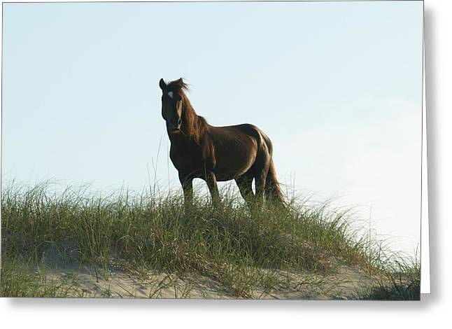 Banker Horse On Dune - 3 Greeting Card