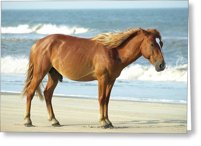 Banker Horses - 2 Greeting Card