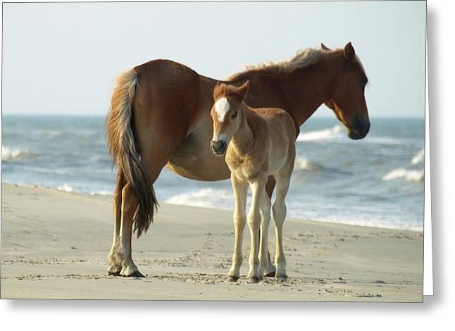 Banker Horses - 4 Greeting Card