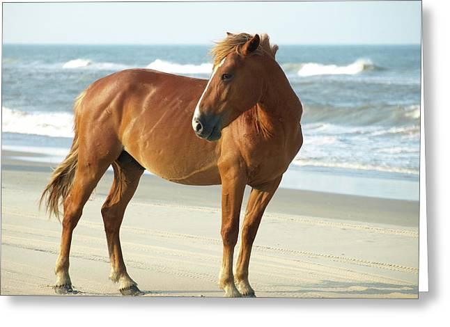 Banker Horses - 6 Greeting Card