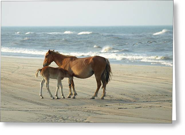 Banker Horses - 7 Greeting Card