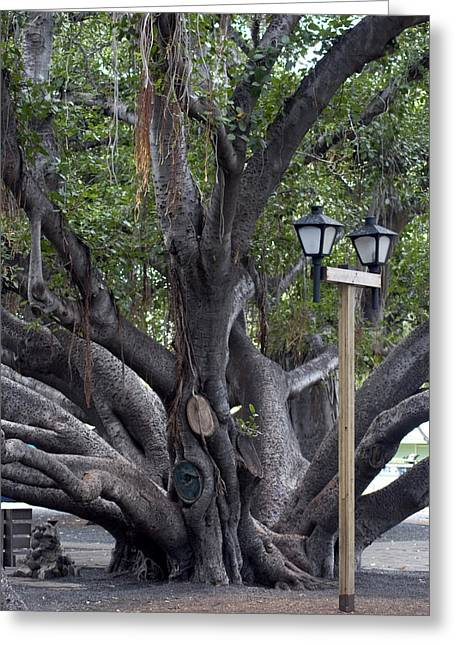 Banyan Tree, Maui Greeting Card