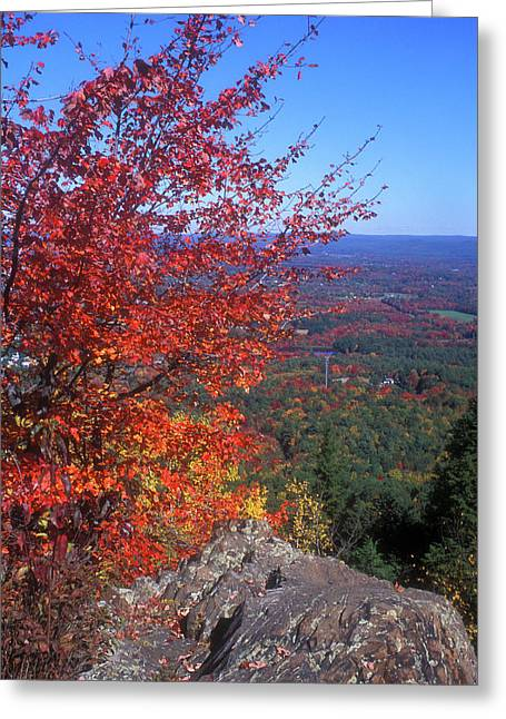 Bare Mountain Foliage View Greeting Card