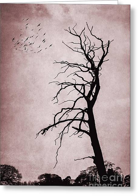 Bare Tree Greeting Card by Svetlana Sewell