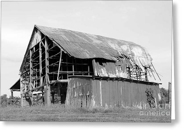 Barn In Kentucky No 75 Greeting Card by Dwight Cook