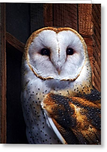 Wildlife Digital Art Greeting Cards - Barn Owl  Greeting Card by Anthony Jones