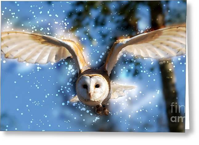 barn owl Tyto alba in flight  Greeting Card