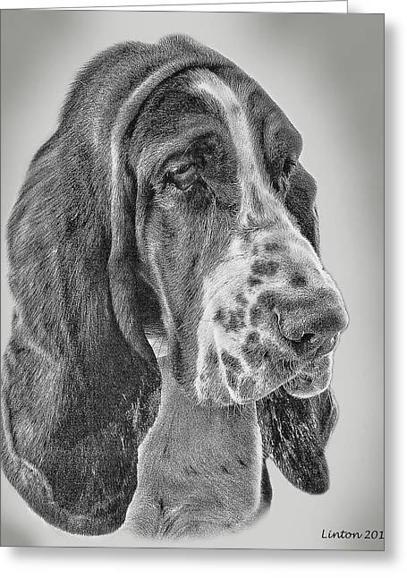 Bassett Hound Greeting Card