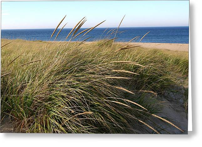 Beach Grass At Truro Greeting Card by Frank Russell