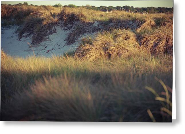 Beach Houses And Dunes Greeting Card