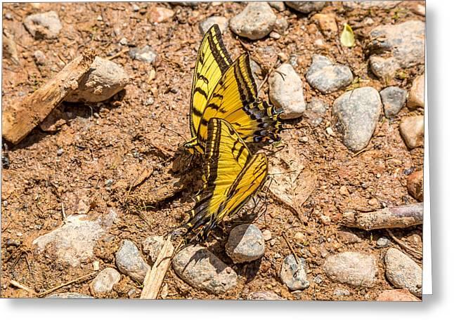 Beautiful Butterflies Greeting Card