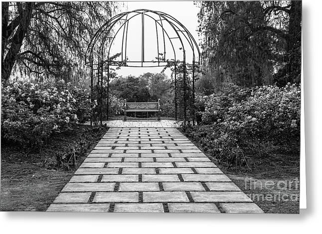 Beautiful Pathway Along The Rose Garden Of The Huntington Librar Greeting Card by Jamie Pham