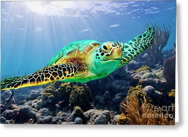 Beautiful Sea Turtle Greeting Card by Jon Neidert