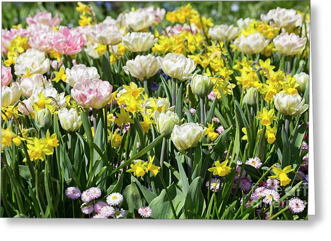 Beautiful Spring Flowers Greeting Card by Louise Heusinkveld