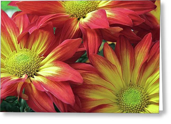 Greeting Card featuring the photograph Beautiful Trio by Allen Beatty