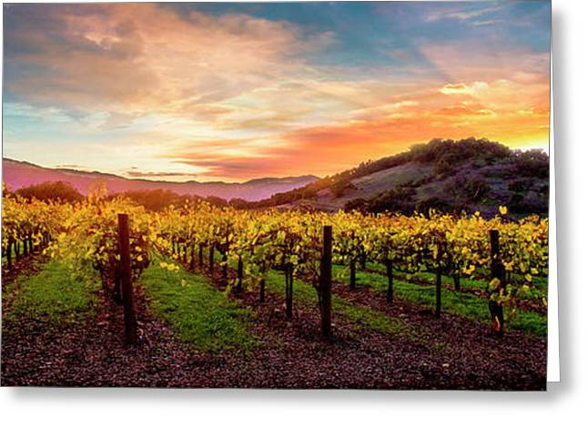 Morning Sun Over The Vineyard Greeting Card