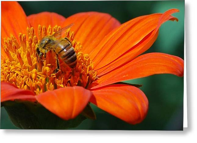 Bee-utiful Greeting Card by Debbie Karnes
