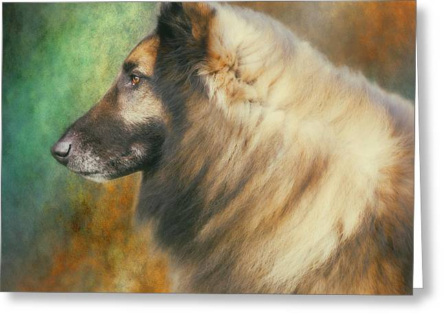 Belgian Tervuren Artwork Greeting Card by Wolf Shadow  Photography