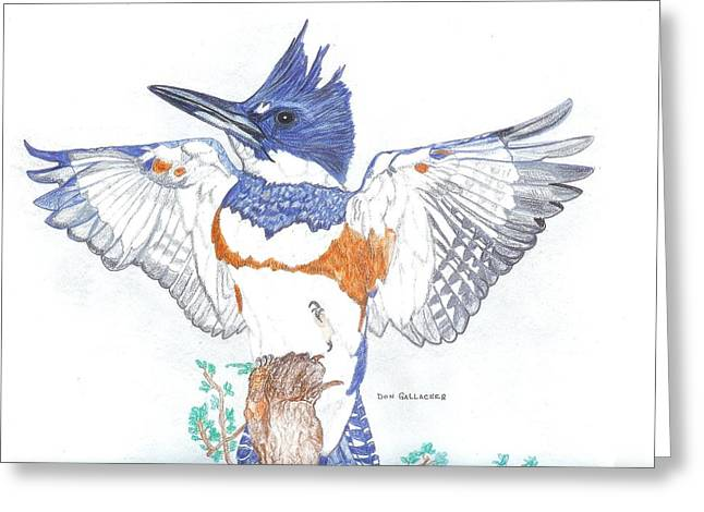 Stellar Drawings Greeting Cards - Belted Kingfisher Greeting Card by Don  Gallacher