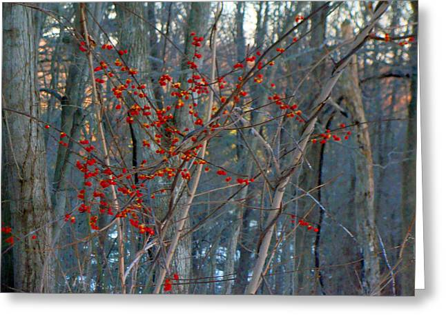 Berries In Bloom Greeting Card by Kate Collins