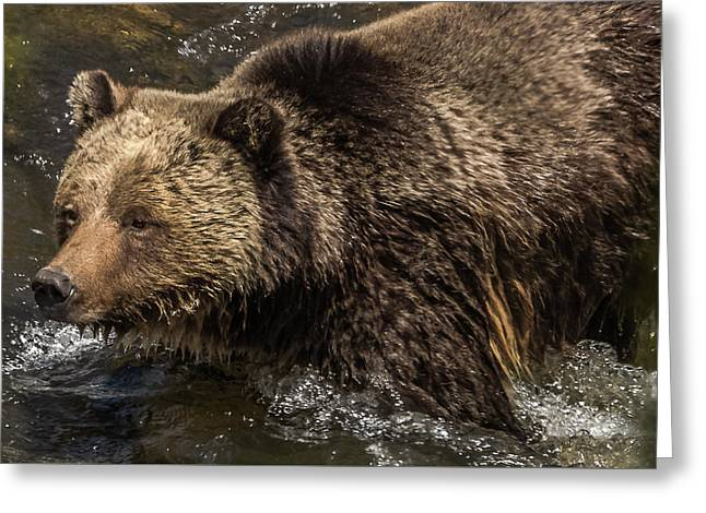 Beryl Springs Sow In The River Greeting Card