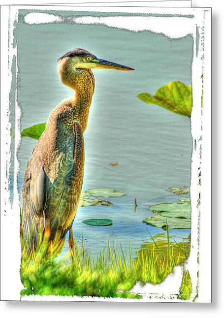 Big Bird Greeting Card