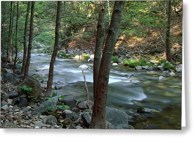 Big Sur River - Ventana Wilderness Greeting Card