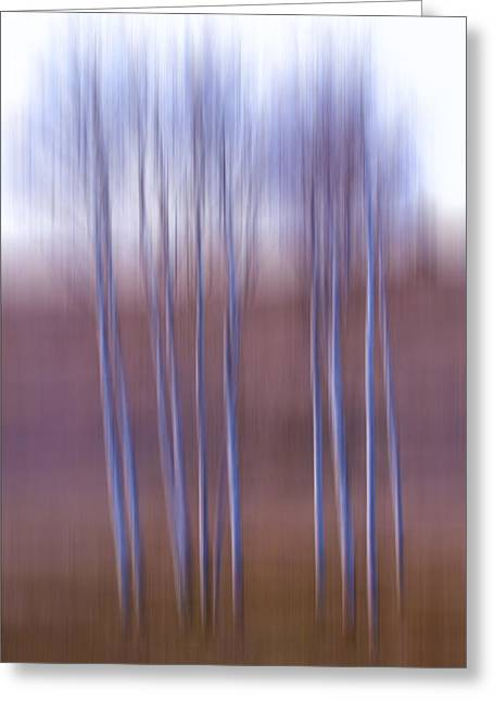 Birch  Greeting Card by Naman Imagery