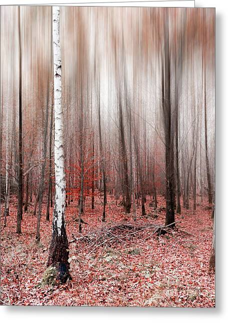Greeting Card featuring the photograph Birchforest In Fall by Hannes Cmarits