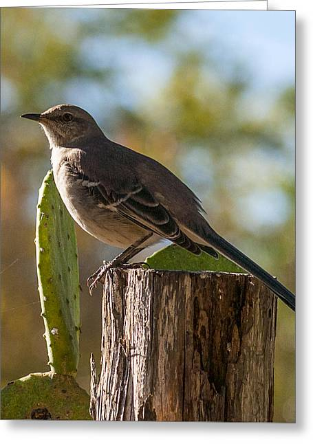 Bird On A Post Greeting Card
