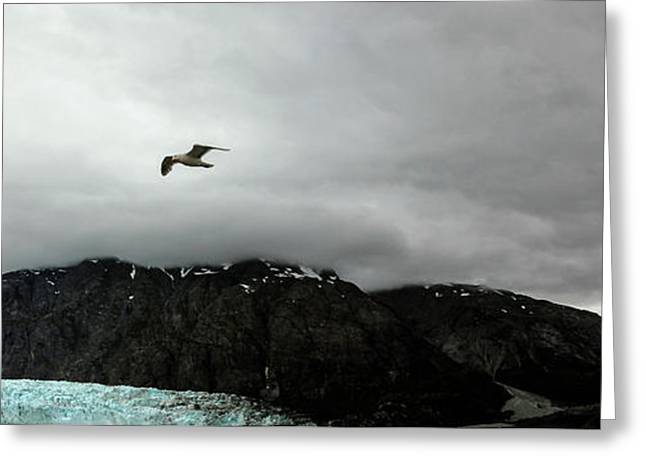 Greeting Card featuring the photograph Bird Over Glacier - Alaska by Madeline Ellis