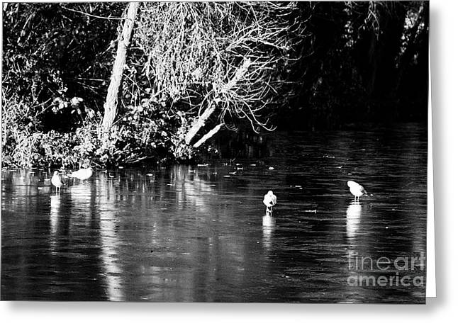 Birds Walking On Frozen Small Lake Pond On A Cold Winter Morning In The Uk Greeting Card by Joe Fox