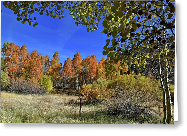 Greeting Card featuring the photograph Bishop Creek by Dung Ma